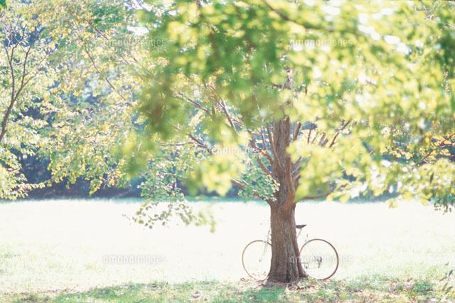 公園の木と自転車[10153000165 ...