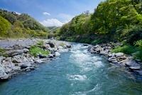若葉の山並みと荒川の急流(長瀞)