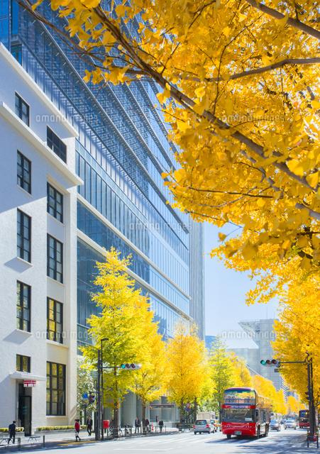 丸の内中央郵便局ビルと街路樹の黄葉と観光バス